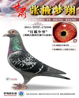 红狐731直孙(红狐少爷)