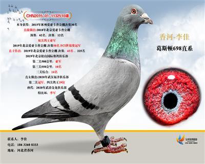 18年北京爱亚卡普鸽