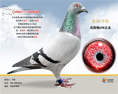 17诚信俱乐部三关鸽王冠军暗插总冠军