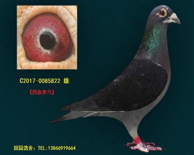 李鸟822