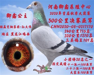 20年河南御鑫公棚决赛亚军
