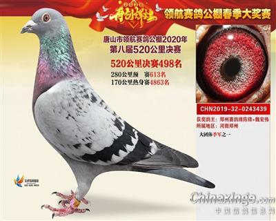 2020年春唐山领航公棚决赛498名