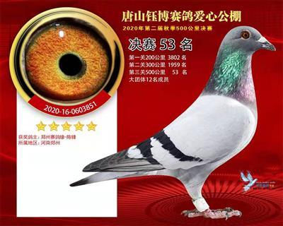 2020年秋唐山钰博公棚决赛53名
