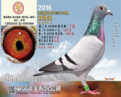2016秋重庆龙乡公棚决赛7名非卖品