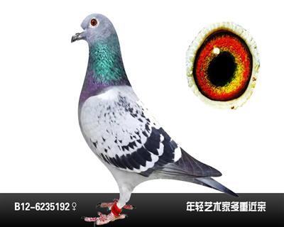 胡本5192
