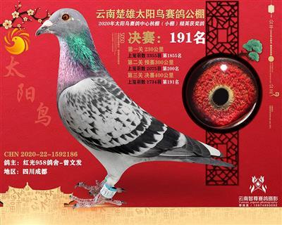 云南太阳鸟小棚191名已售