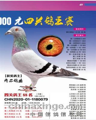 20年秋北京丰台区信鸽协会四关综合88名