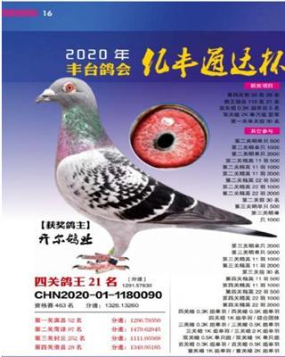20年秋北京丰台区信鸽协会四关综合21名