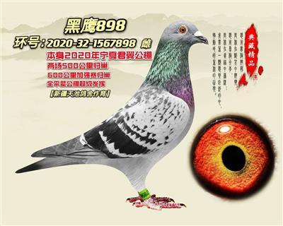 黑鹰898