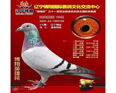 辽中博翔四关鸽王18名