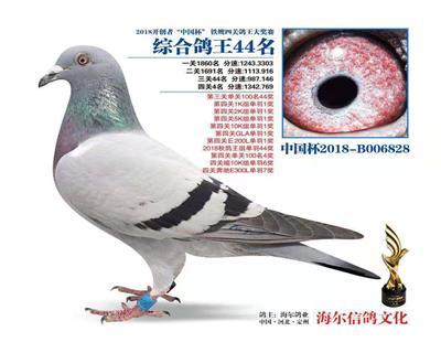 北京开创鸽王44名  (开创季军之母)