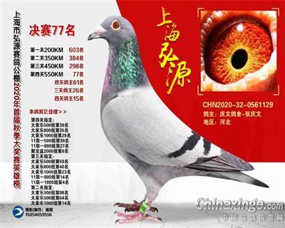 上海弘源公棚决赛 7