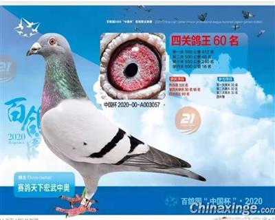 2020年北京百鸽园综合60位