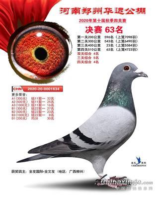 华远鸽王5
