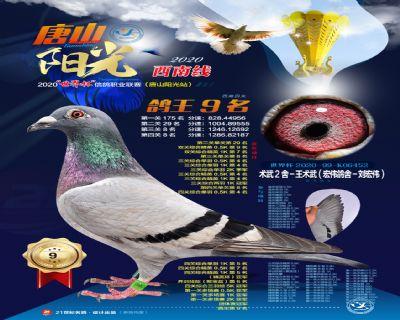 2020年秋季阳光鸽