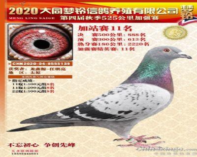 龙鑫139