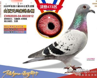 龙鑫812