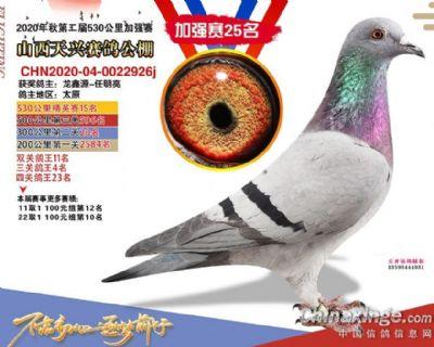 龙鑫926