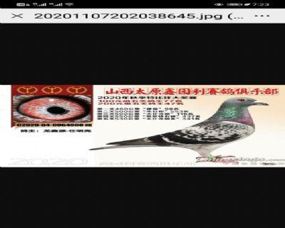 龙鑫808
