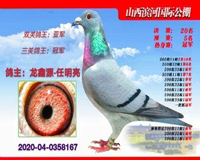龙鑫8167