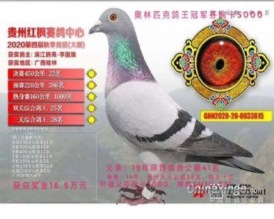 2020年贵州红枫大棚22名广西冠军