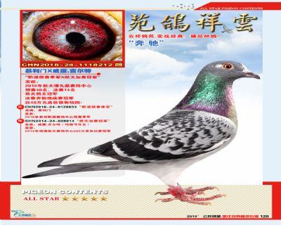 云祥鸽苑种鸽专辑第四