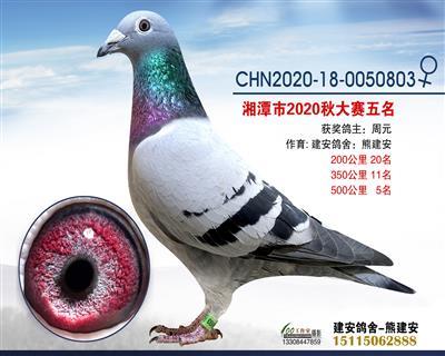 湘潭市信鸽协会大赛五名