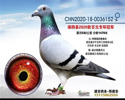 湘阴县信鸽协会百元专环冠军