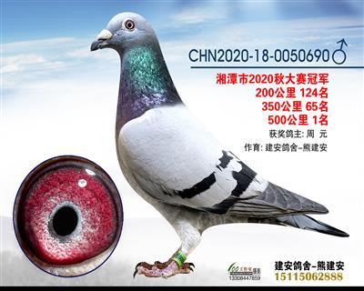 湘潭市信鸽协会大赛冠军