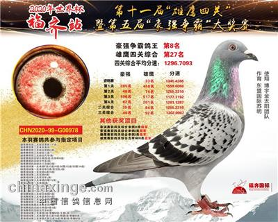 """""""2020福齐鸽王8名"""""""