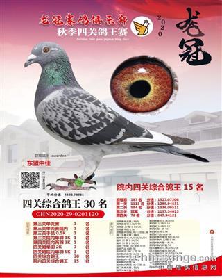 """""""2020龙冠鸽王30名"""""""