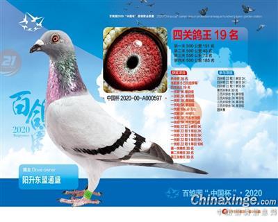 """""""2020百鸽园鸽王19名"""""""