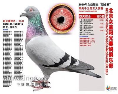 北京众意阳光俱乐部奖鸽