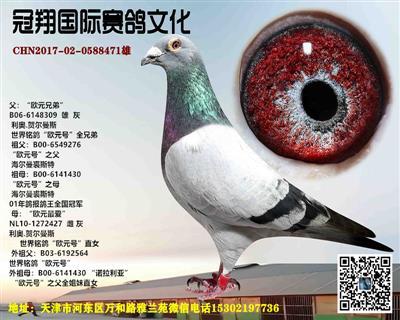 拍卖鸽10号欧元