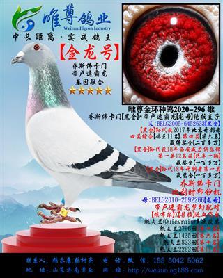 """【金龙号】乔斯佛卡门""""黄金配对""""直孙"""