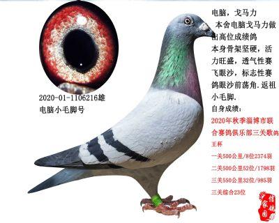 三关综合鸽王23,电脑戈马力