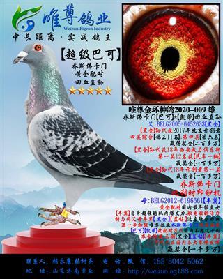 """【超级巴可】乔斯佛卡门""""黄金配对""""直孙"""