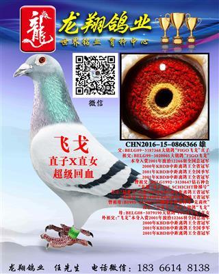 济南龙翔鸽业