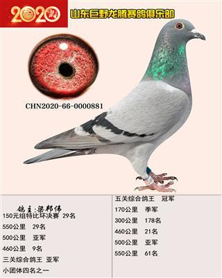 鸽王冠军881