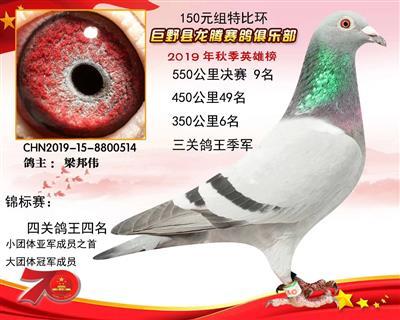 鸽王季军514