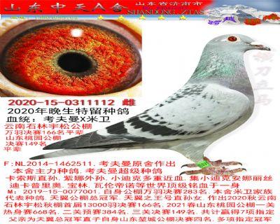 特留种鸽1112雌