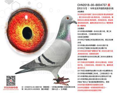 【开尔737】18年北京开创四关综合5名