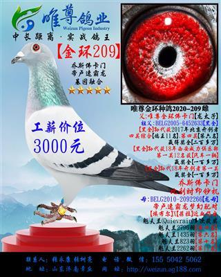 【金环209】【龙母