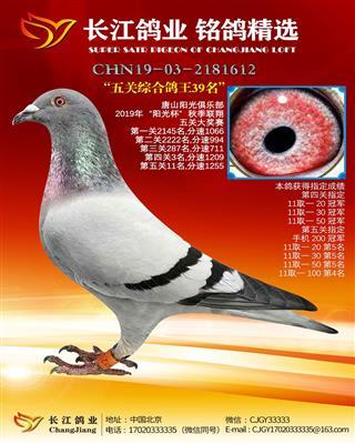 2019年唐山阳光五关综合鸽王39名