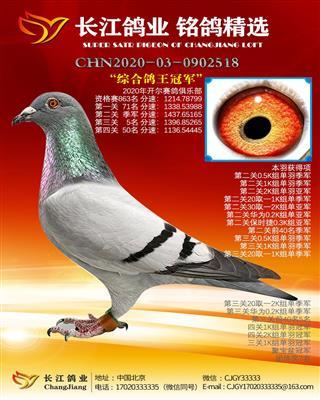 """2020开尔赛鸽俱乐部 """"综合鸽王冠军"""""""