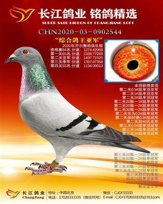 """2020开尔赛鸽俱乐部 """"综合鸽王亚军"""""""