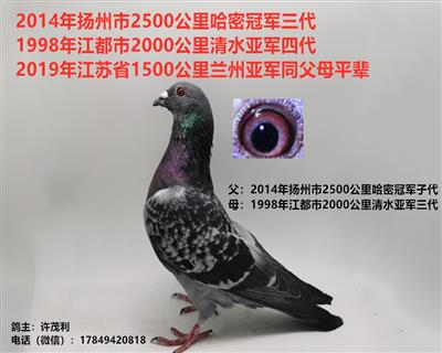 国血超远程吴淞哈密冠军三代兰州亚军平辈
