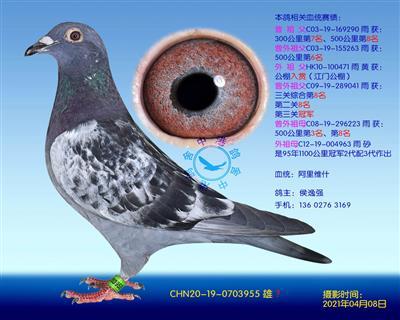 中港阿里维什-955