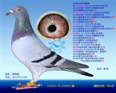 中港詹森�N��-957