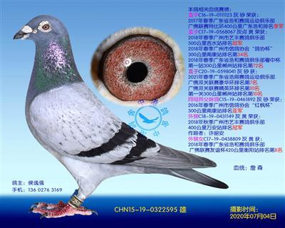 中港詹森�N��-595